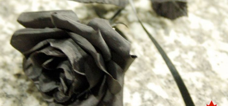 Photo of black rose with Lewy.ca logo